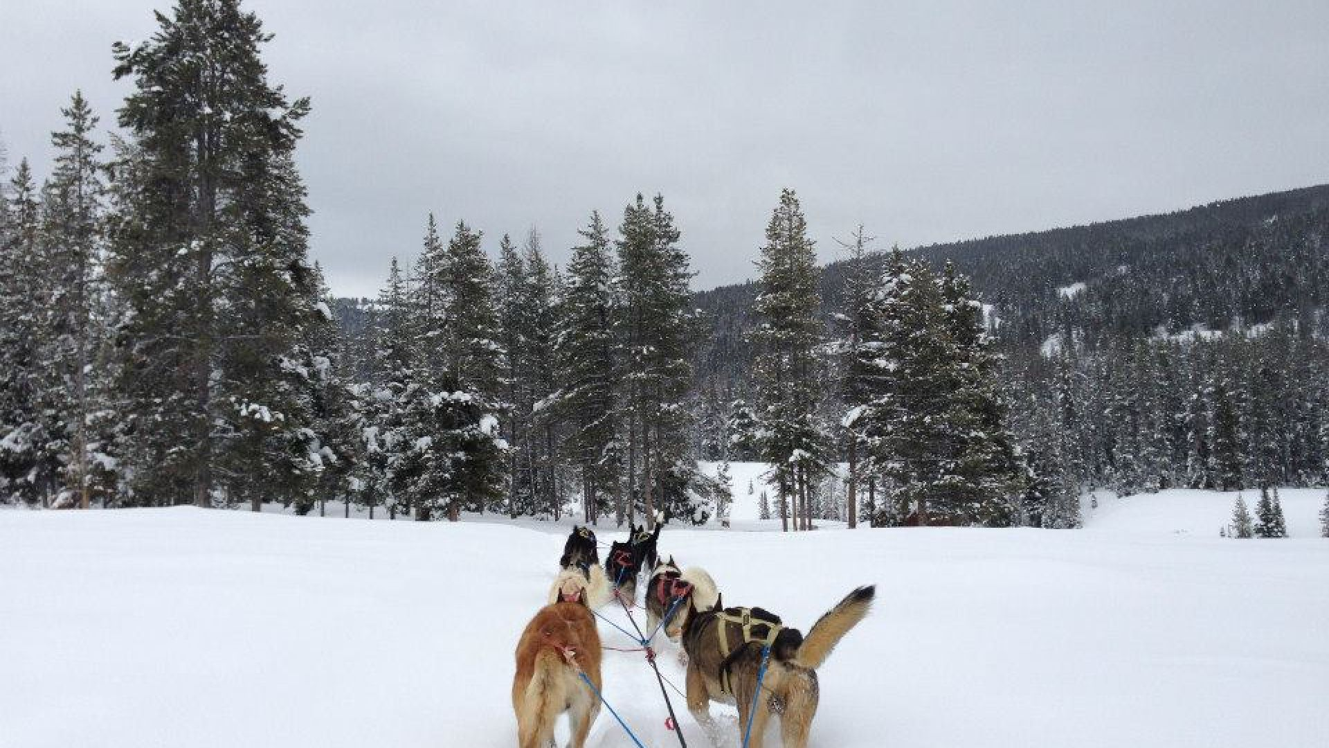 Take a ride on a dog sled!