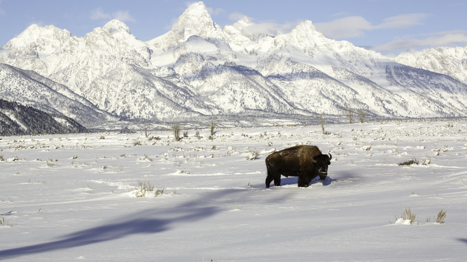 Snowmobile trips in yellowstone jackson hole central for Things to do in jackson hole wyoming