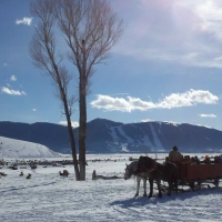National Elk Refuge Sleigh Rides