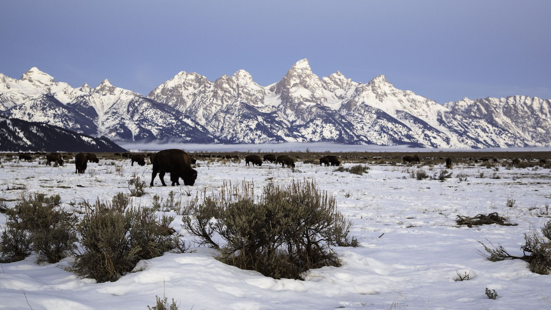 Winter tours snowcoach jackson hole wy central for Things to do in jackson wy